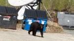 Bear visit at CTV studio