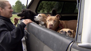 Denise Baker-Grant smiles as she loads a group of dogs into her truck in North Vancouver, B.C. on Thursday, May 17, 2018.