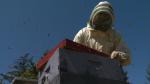 Long winter impacting bee population