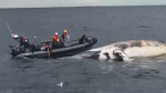 Increased enforcement to protect endangered right whales
