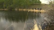 ASCCA - AIWC beavers released