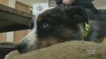 Indigo invites dogs into aisles