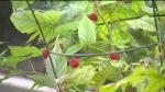 Health risks hiding in the garden