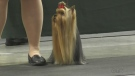 The KW Kennel club holds its annual dog show featuring over 100 different dog breeds