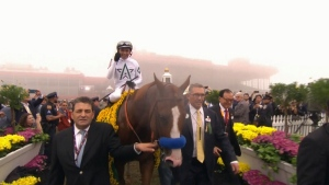 Justify, a colt who's won the Preakness Stakes and the Kentucky Derby, was bred by Langley, B.C.'s John Gunther.