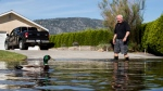 A duck swims past Rick Sylbester as he walks across a flooded street after moving a vehicle to higher ground, in Osoyoos, British Columbia, Canada on Saturday, May 12, 2018. Thousands of people have been evacuated from their homes in British Columbia's southern interior as officials warn of flooding due to extremely heavy snowpacks, sudden downpours and unseasonably warm temperatures. (Darryl Dyck/The Canadian Press via AP)