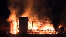 CTV National News: Toronto stables fire