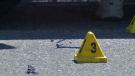 Marker in Acadia after pedestrians struck
