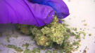 Local police forces are training and gearing up for the legalization of marijuana.