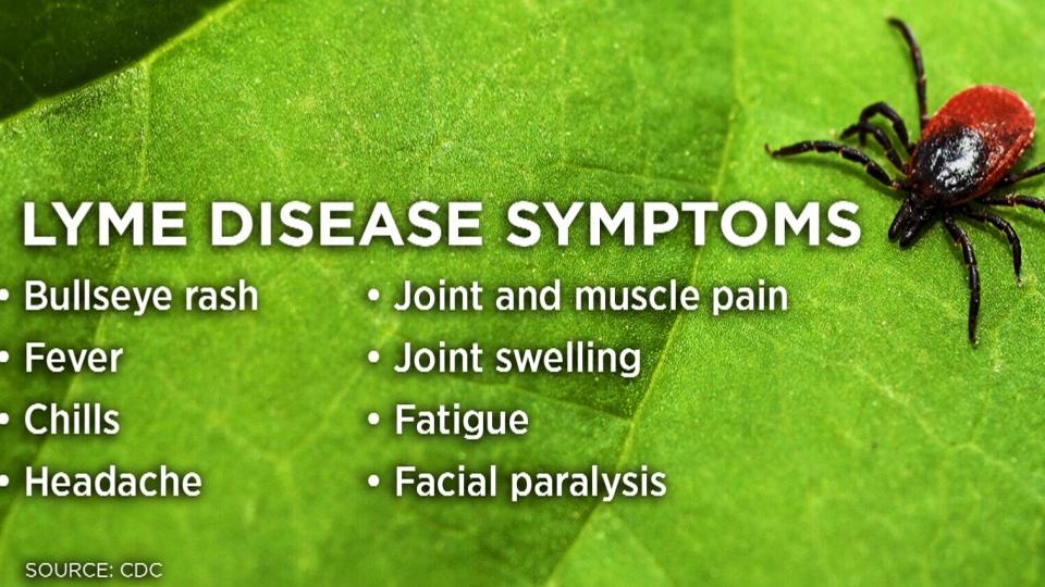 "The bullseye rash is ""like the homerun for Lyme disease diagnosis,"" said Bogoch."
