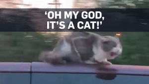 Caught on cam: Cat clings to roof of moving van
