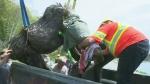 Crews rescue injured moose in Muskoka