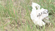 Moose Jaw students want plastic bag ban