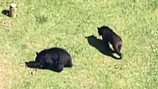 Popular park partially closed due to bears