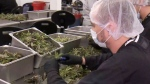 A special tour around Canopy Tweed Plant
