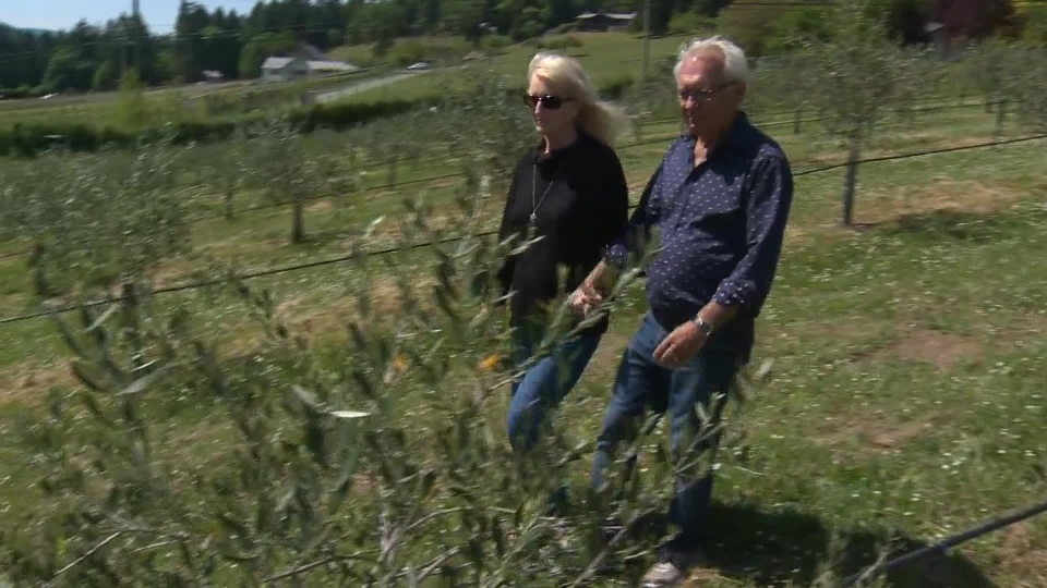 George and Sheri Braun walk through their olive grove in Fulford Valley. May 29, 2018. (CTV Vancouver Island)