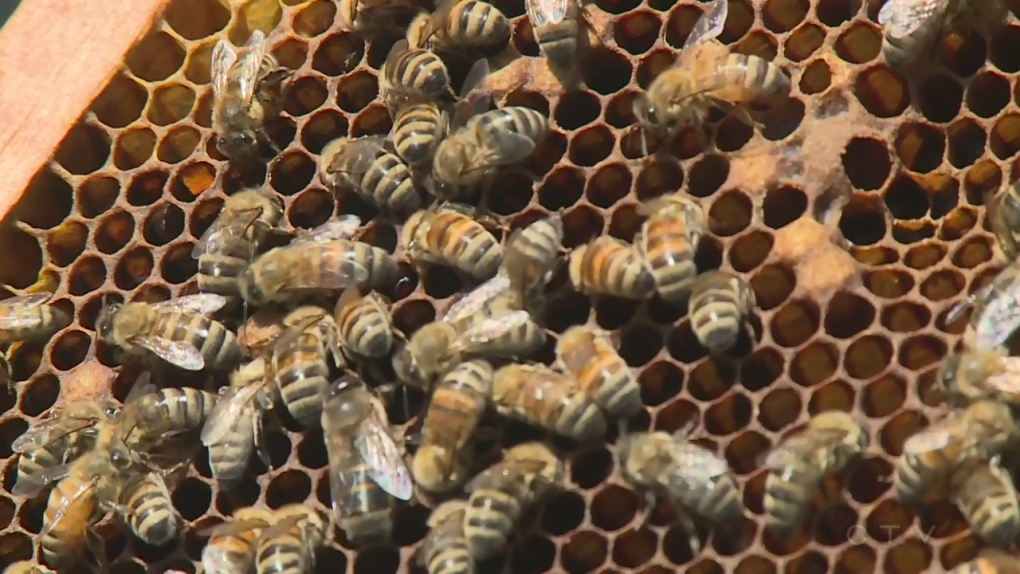 Report stings Hill's City Hall beehive idea