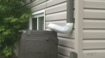 Rain barrels can divert water from sewage system