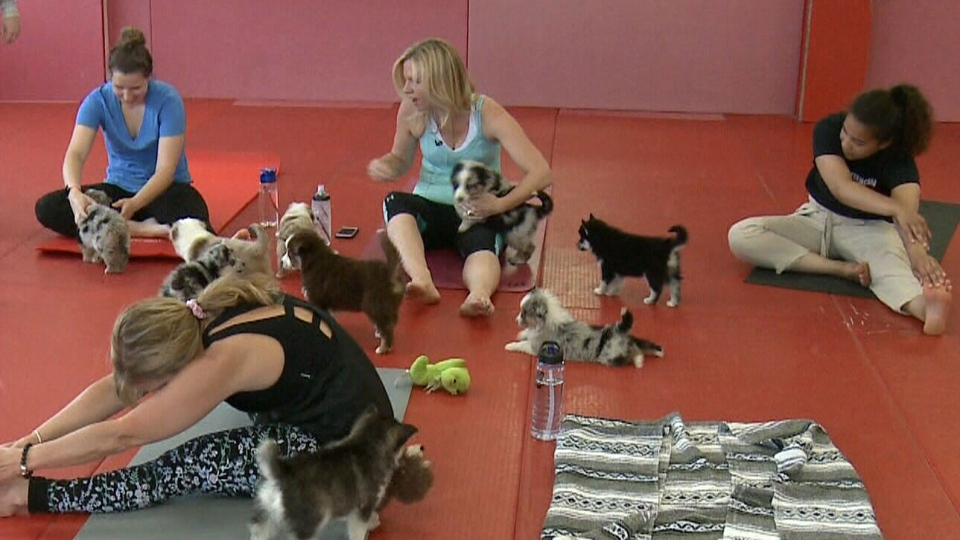 At puppy yoga, keeping track of the fluffy participants is half the battle.