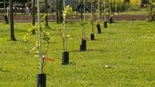crops cowichan island grown