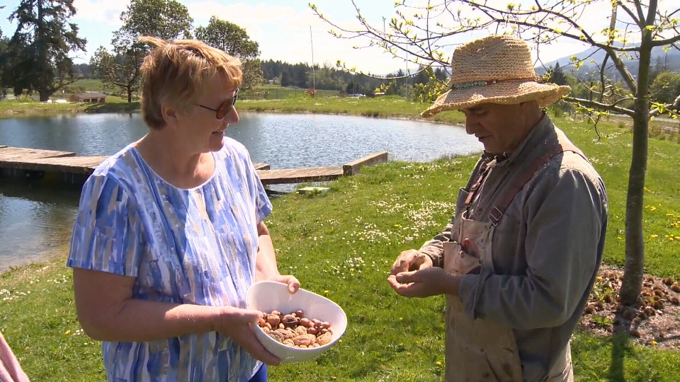 Chestnuts and walnuts are among the many things grown at Terra Nossa Organic Farm in Mill Bay. May 31, 2018. (CTV Vancouver Island)