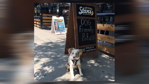A dog seated night to the One Night Stan's sign on 17 Avenue S.W. The pub is the first on the Red Mile to welcome dogs onto its patio.