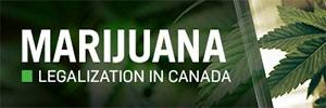 Calgary marijuana teaser