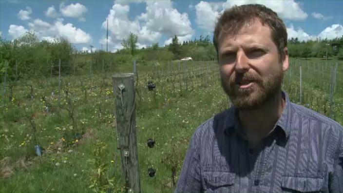 Zach Everett is a New Brunswick grape grower.