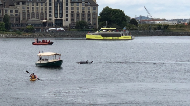 orcas inner harbour victoria
