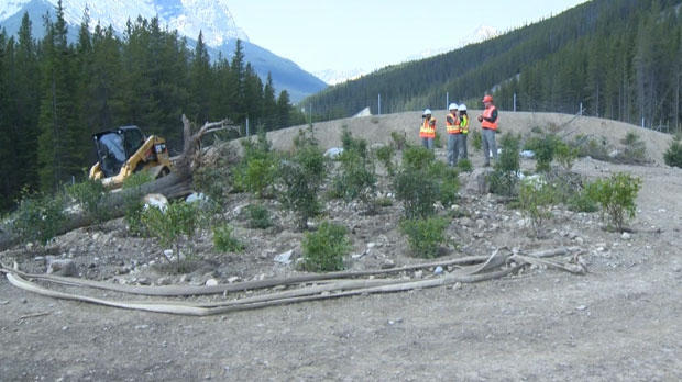 Crews are landscaping the surface of the wildlife overpass to make it seem exactly as the park around it.