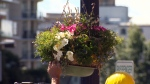 A City of Victoria worker hangs a flower basket in the city's downtown core. June 11, 2018. (CTV Vancouver Island)