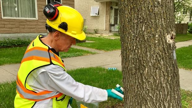 City to start emerald ash borer management program Monday