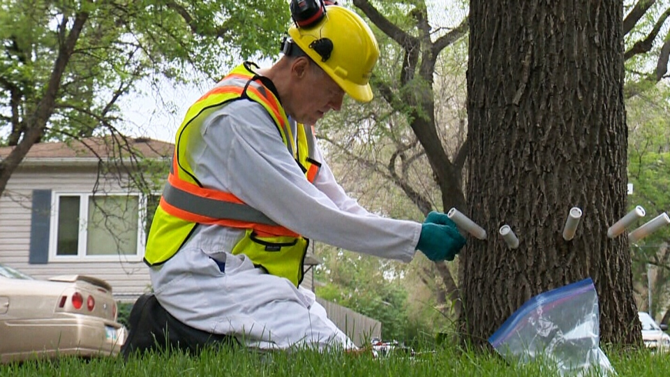 Fight against emerald ash borer ramps up