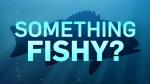 CTV News series: Something Fishy