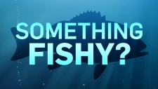 CTV News series: Something Fishy