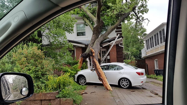 Tree knocked into a home near Avenue Road and St. Clair Avenue. (Twitter @C_FSTA_3)