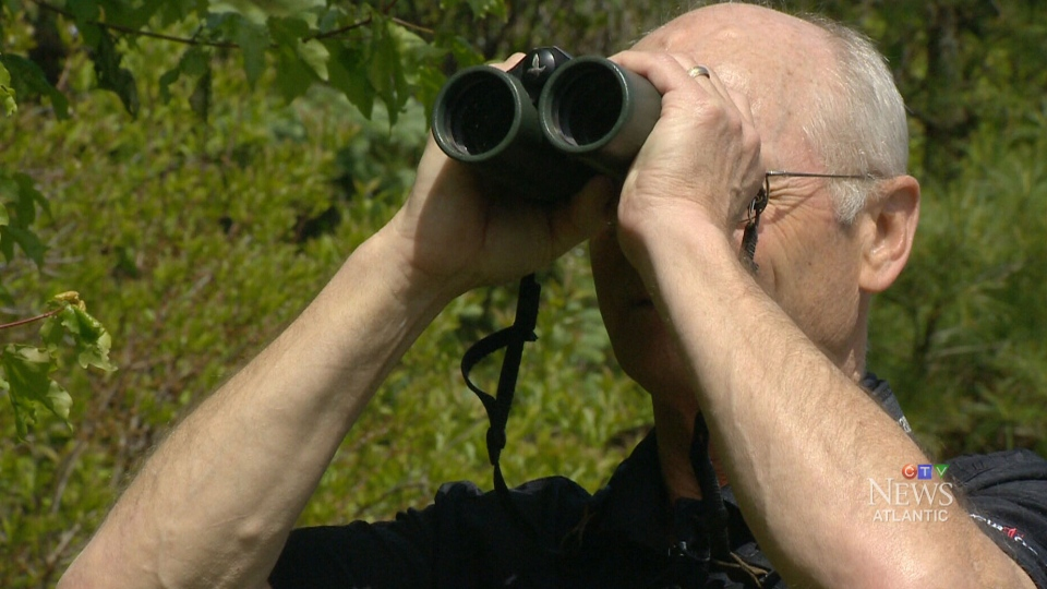 David Currie, president of the Nova Scotia Bird Society, says some species of bird are seeing a 90 per cent decline. (CTV)