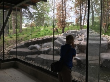 Viewing area for wolf habitat