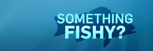 CTV News series: Something Fishy?