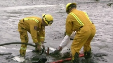 Rescue exercise on Burrard Inlet mud flats