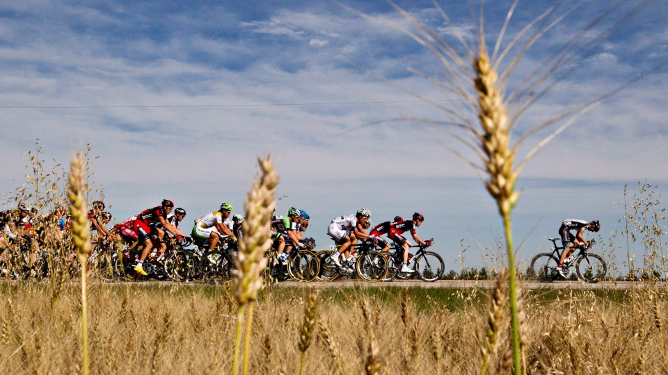 Racers ride past a wheat field during stage two of the Tour of Alberta cycling race in Devon, Alta., on Thursday September 5, 2013. (THE CANADIAN PRESS/Jason Franson)