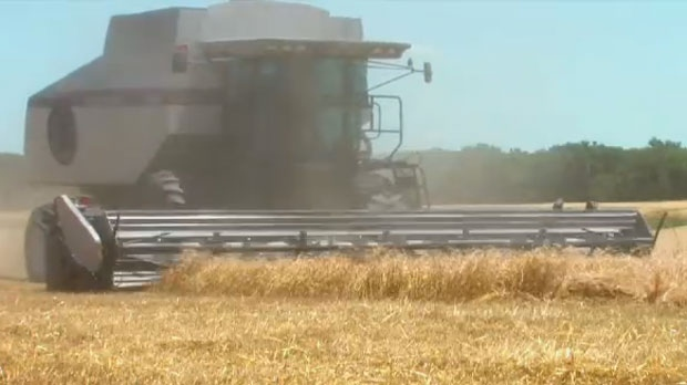Alberta on the defensive after genetically modified wheat