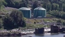 Kinder Morgan broke animal protection rules
