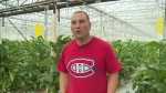 Leamington greenhouses react to cap and trade changes