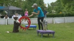 The Poochie Power Walk featured contests and games for pets and owners alike on Saturday.