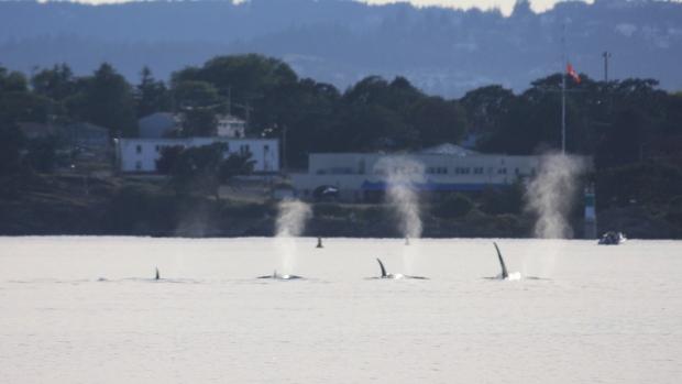 orcas inner harbour