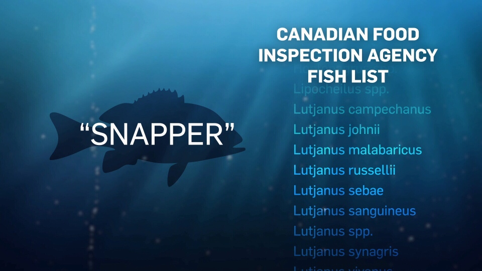 Are Canada's fish laws adding to mislabelling confusion? | CTV News
