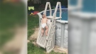 The two-year-old boy climbed the gate blocking the ladder to the family's above-ground pool.