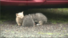 Stray cats are proliferating on Isle Madame and creating a huge challenge for animal rescue groups.