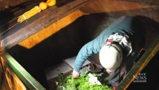 growing dumpster diving 'subculture' in B.C.